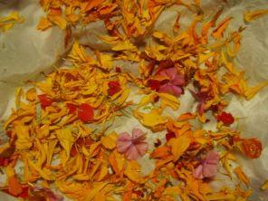 petals on silk