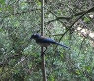 birds (10 of 28)