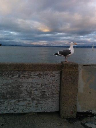 birds (18 of 28)