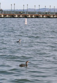 birds (2 of 28)