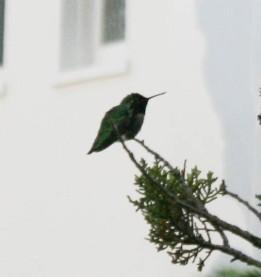 birds (3 of 28)