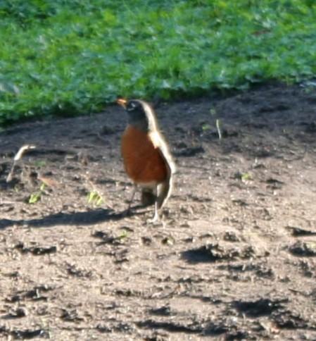 birds (5 of 28)