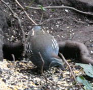 birds (7 of 28)