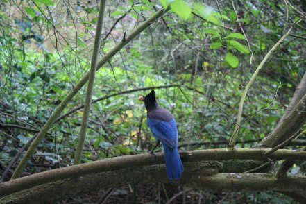 birds (8 of 28)