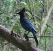 birds (9 of 28)